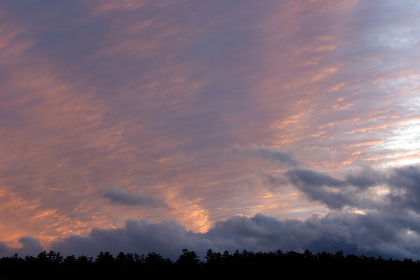 sunset,   clouds,   trees,   nature,   outdoors,   dusk,   sunlight,   sky,   warm,   scenic,   forest,   environment,   horizon,   pastel,   dawn,   sunrise,   pink,  cloudscape
