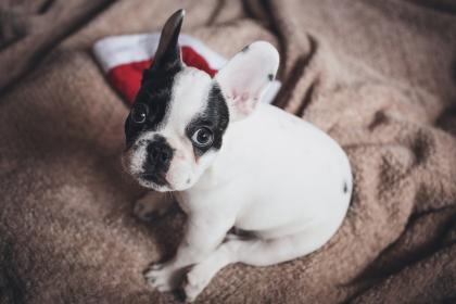 free photo of dog  puppy
