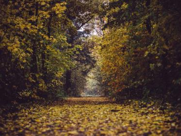 park, forest, woods, trees, leaves, branches, autumn, fall, nature, path, trail, outdoors