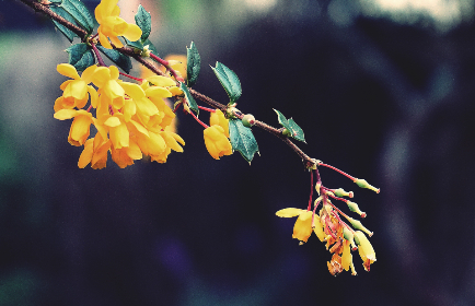 flowers,  trees,  blossom,  spring,  yellow flowers,  plants,  garden,  nature, outdoors, bokeh, bloom