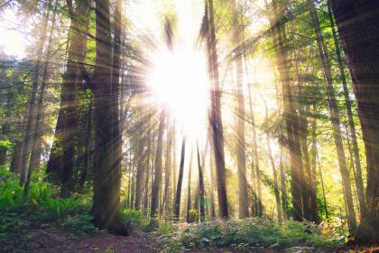 sun rays, sunlight, trees, forest, woods, nature