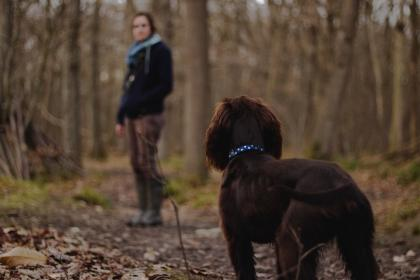 people, woman, dog, animal, puppy, pet, forest, woods, stroll, leaves, autumn, fall, trek