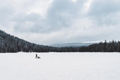 mountain, landscape, man, dog, animal, snow, trees, pines, view, aesthetic, rocks, fog, sky, clouds