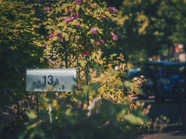 mailbox, outside, green, trees, flowers, nature