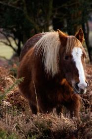 horse, animal, brown, grassland,plant, trees, woods, snout