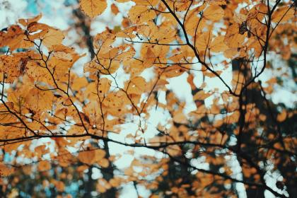trees, leaves, dried, autumn, fall