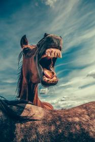 horse, animal, brown, grassland, clouds, sky, trees, hair, teeth, tongue