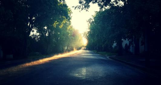 sunrise, trees, morning, street, road