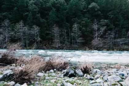 river, stream, water, rapids, rocks, forest, trees, woods, nature
