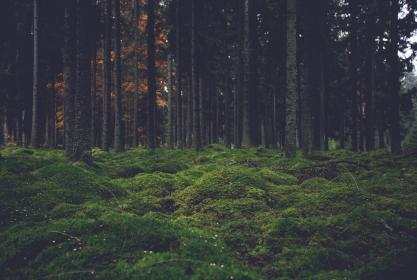 green, grass, woods, forest, trees, nature