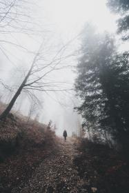 people, travel, adventure, woods, forest, mountain, climb, hike, trek, nature, alone, trees, plants, foggy, landscape