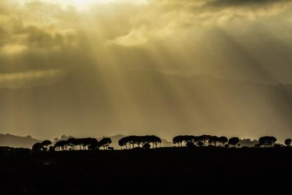 trees, plant, view, nature, outdoor, mountain, silhouette, dark, landscape, sunlight, cloudy, sky