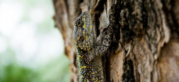 animals, reptiles, lizard, gecko, scales, tree, bark, tree, wood, bokeh