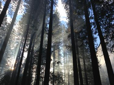 nature, landscape, woods, forest, sun, ray, trees, leaves, green