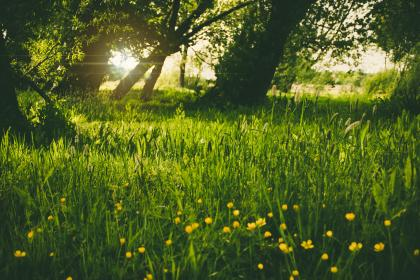 nature, plains, forests, trees, grass, wild, flowers, solar, flare, sky