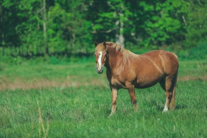 green, grass, trees, plants, grassland, field, farm, outdoor, horse, animal