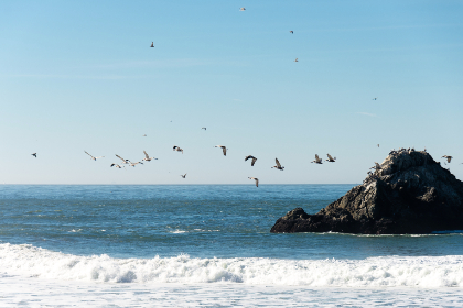 san francisco,  ocean,  beach,  blue,  pacific,  birds,  pelicans,  flying birds,  rock,  water,  surf