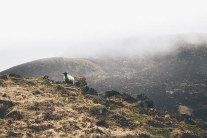 mountain, highland, cloud, fog, summit, peak, landscape, nature, valley, sheep, animal