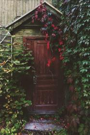 entrance, door, wood, vines, leaves, garden, trees