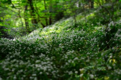 free photo of flowers  nature