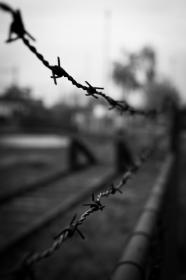 barbed wire, barb wire, black and white