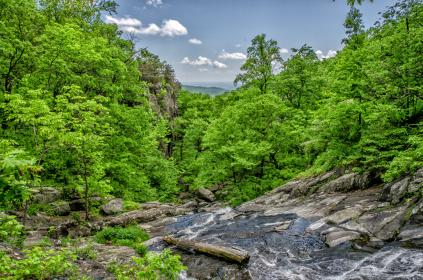 sky, blue, clouds, water, trees, leaves, green, branches, logs, stream, vibrant, rocks
