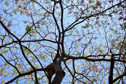 flowers, nature, blossoms, pink, carnation, branches, twigs, trees, petals, leaves, outdoors, sky