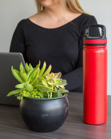 woman,  computer,  freelance,  office,  desk,  plant,  water,  bottle,  laptop,  typing,  person,  business