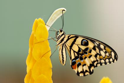 free photo of insects  butterfly