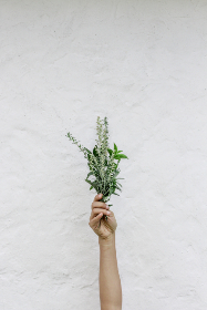 hand,  holding,  flowers,  isolated,  background,  texture,  copy space,  bloom,  blossom,  fresh,  garden,  nature,  natural,  wall,  bouquet,  arm,  leaves,  leaf,  feminine,  floral,  spring,  plant