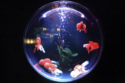 aquarium, fish, water, bubbles, animal, fin