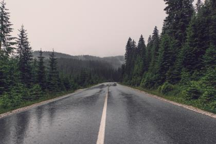 road, rain, trees, forest, woods, travel, adventure, trip, road trip, pine tree, green