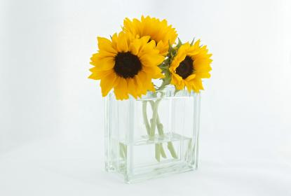 sunflowers, vase, decor, white