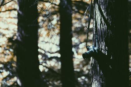 tree, plant, wood, nature, camera, lens, photography, bokeh