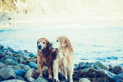 dogs, animals, pets, wet, water, beach, rocks