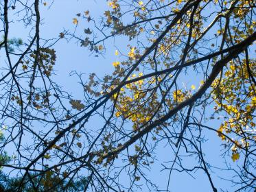 trees, branches, leaves, sky
