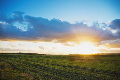 sunset, sky, clouds, field, green, grass, rural, farm, countryside, agriculture, landscape, nature, outdoors