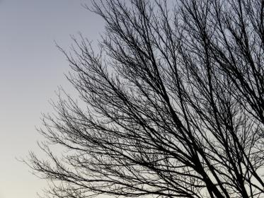 trees, branches, sky