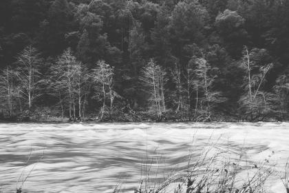 river, rapids, water, trees, nature, black and white