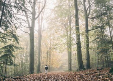 kid, child, walking, forest, fog, trees, plant, outdoor, leaf, fall, autumn