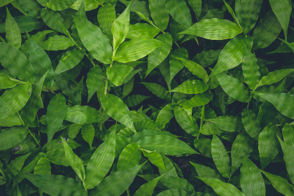 above,   aerial,   background,   beautiful,   beauty,   botanical,   branch,   bright,   closeup,   color,   colorful,   flora,   floral,   foliage,   forest,   fresh,   garden,   green,   greenery,   growth,   hipster,   jungle,   leaf,   light,   natural,   nature,   nature background,   oak,   ov