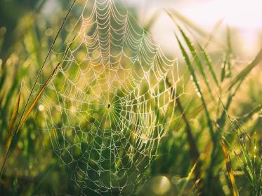 spider, web, green, grass, nature, outdoor, bokeh, sunrise, light, insect, plant, field