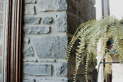 fern,  architecture,  lobby,  bricks,  plants,  plant,  furniture,  living room, decor
