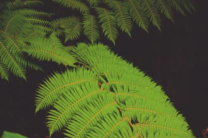 green, leaf, plant, nature, dark, fern, outdoor