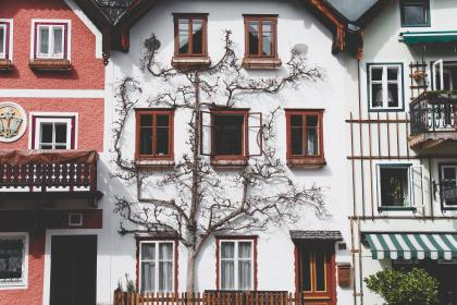 architecture, house, balcony, apartment, tree, branches, nature, facade