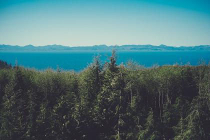 sky, blue, clear, mountains, horizon, water, trees, green, branches, nature