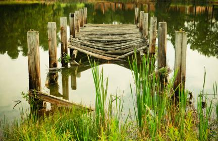 wood, bridge, logs, swamp, water, green, grass, lake