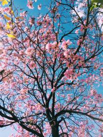 free photo of pink  blossoms