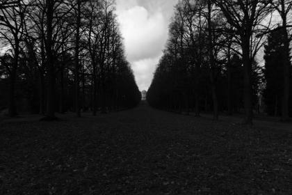 path, trail, trees, black and white