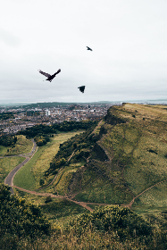 birds,  flying,  mountains,  crows,  grass,  hills,  sky,  nature,  outdoors,  outside,  country,  path,  hiking,  city,  landscape,  scenic,  overcast,  flight,  animals,  wildlife